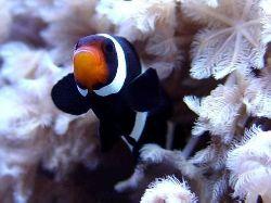 Akvarijní mořské