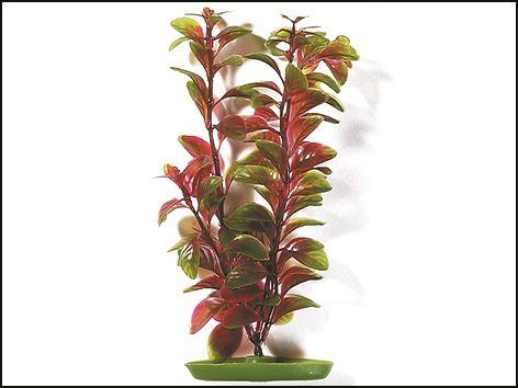 Rostliny akvarijní