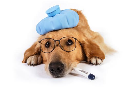 Zdravotní problémy psů a koček