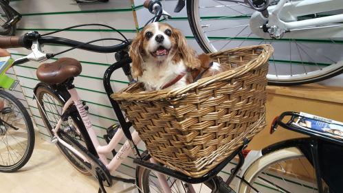 Cestování se psem na kole