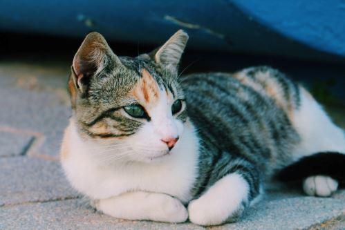 Onemocnění ledvin u koček