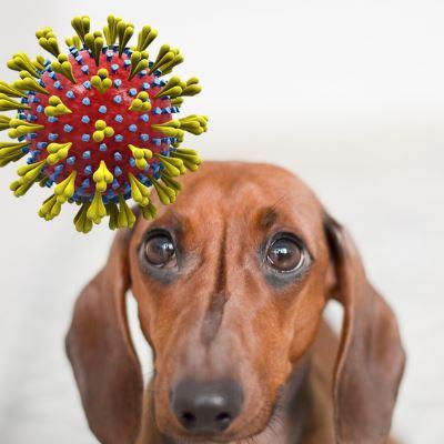 Může Váš domácí mazlíček dostat koronavirus COVID-19?