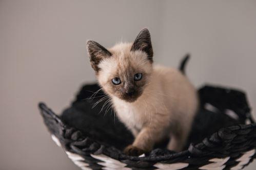 Čím a jak nejlépe krmit kotě?