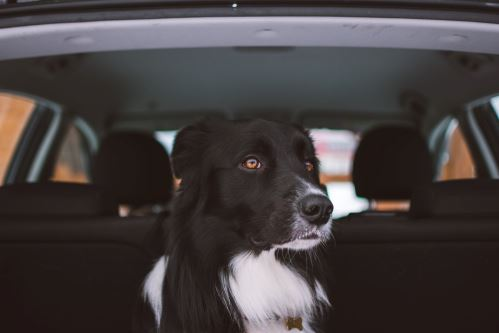 Cestování se psem v autě