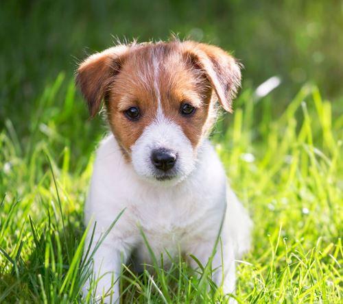 Hurá, máme štěně! Tipy a triky pro čerstvé pejskaře