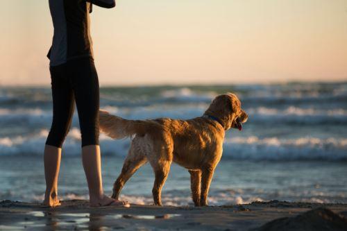 Jak často čistit anální žlázky u psa?