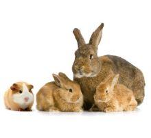 Roboran H pro králíky Barevné plv 200g