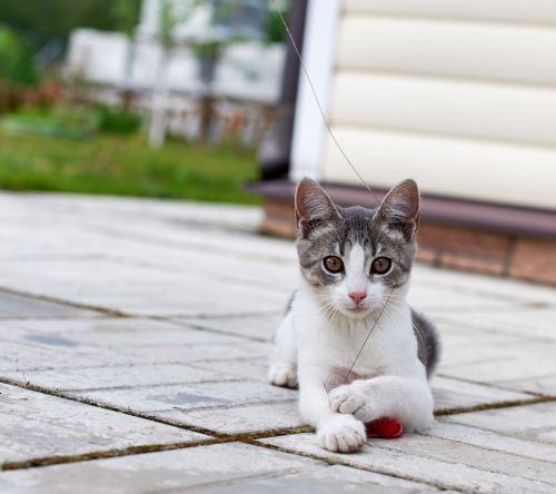 Hurá, máme kotě! Tipy a triky pro nové chovatele