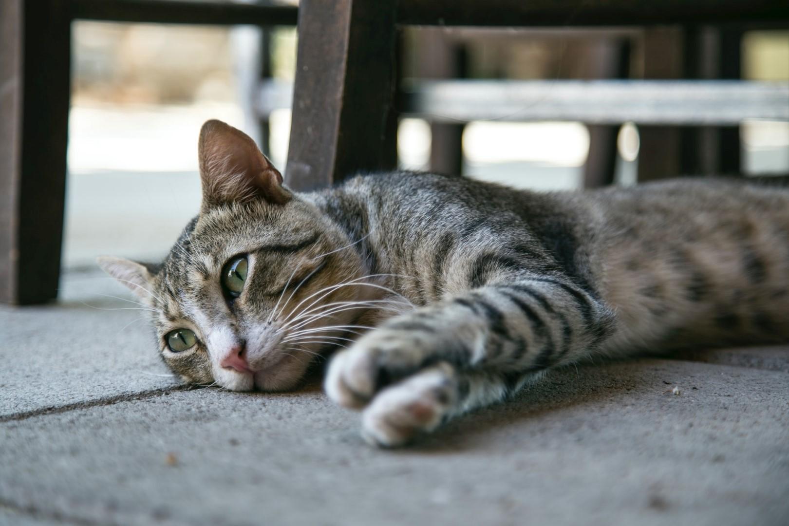 artroza u koček