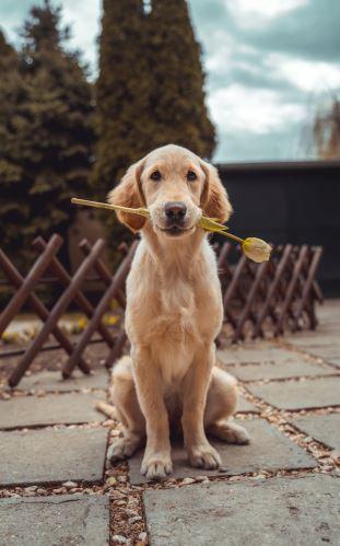 Čím krmit kastrovaného psa či fenku?